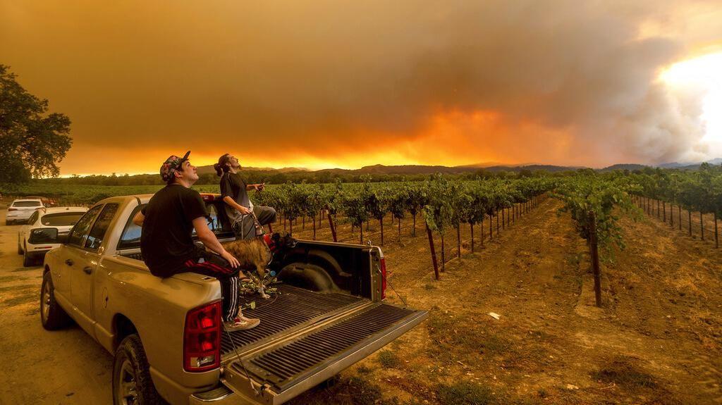 Asap Kebakaran Hutan California Cemari Perkebunan Anggur