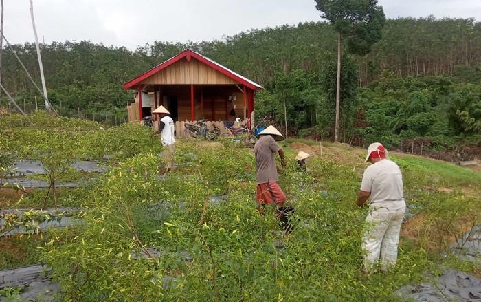 Memperingati Hari Hutan Nasional, petani hutan di Jambi ini terus mendapatkan dukungan dan dijanjikan kehidupan yang lebih layak lagi. Asyik...