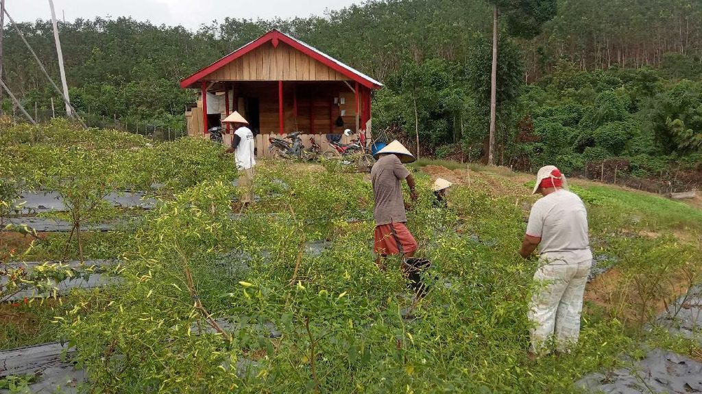 Asyik, Petani Hutan di Jambi Terus Dapat Dukungan
