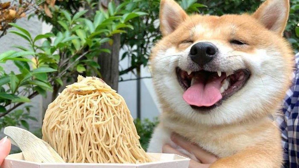 Gemas! Anjing Shiba Inu Ini Selalu Senyum Jika Lihat Makanan