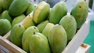 Pohon Mangga: Cara Menanam hingga Panennya