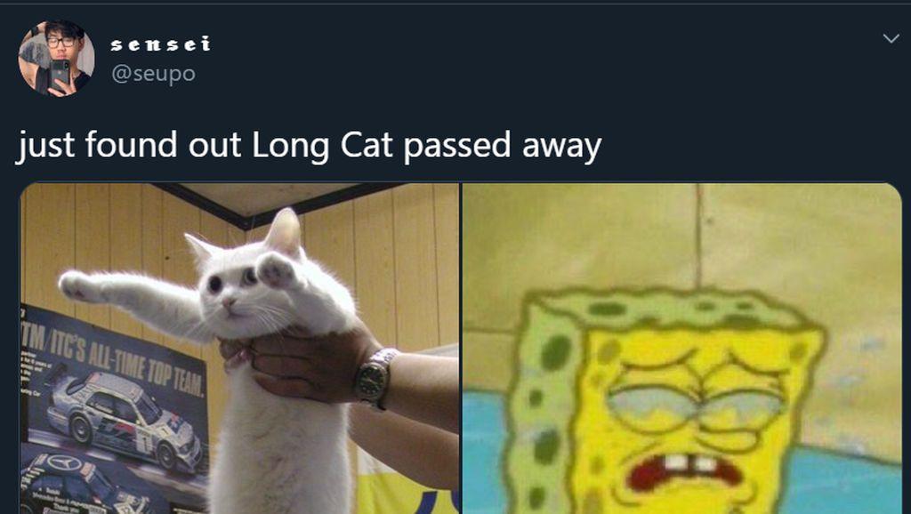 Meme Mengharukan Kenang Kucing Longcat