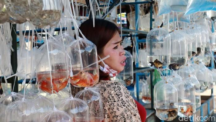 Hobi memelihara ikan hias sedang naik daun di masa pandemi COVID-19. Hal ini mendatangkan berkah bagi penjual ikan hias di Pasar Ikan Hias Muara, Bandung.