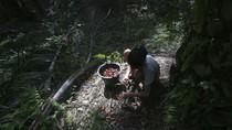 Potret Muram Kehidupan Para Buruh Perkebunan Sawit