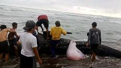 Video Hiu Paus Terdampar di Cianjur, Dagingnya Dipotong Warga