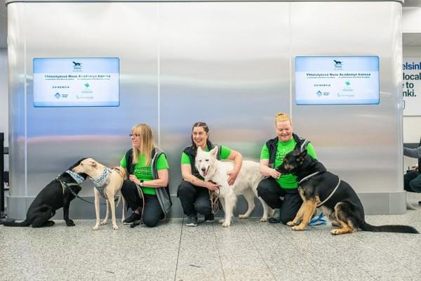 Anjing-anjing yang digunakan petugas untuk mendeteksi penumpang yang terkena virus Corona. Antara si anjing dan manusia tidak akan berada dalam satu tempat saat pengetesan dimulai. Sampel keringat dari penumpang ditempatkan pada wadah khusus yang kemudian diberikan ke anjing. Hal ini juga untuk mencegah para petugas terkena infeksi. Foto: Helsinki Airport