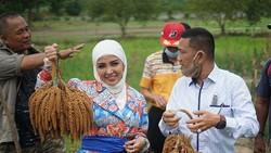 Main ke Sawah, Pakaian Bella Shofie Dihujat Netizen