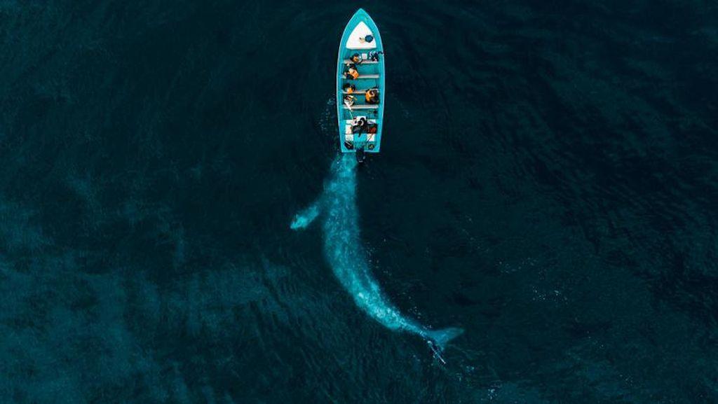 Suguhan Karya Jawara Kontes Drone Bikin Mata Terpana
