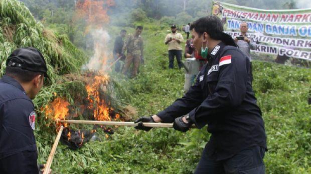 Polisi memusnahkan 10 hektare ladang ganja di Aceh Besar