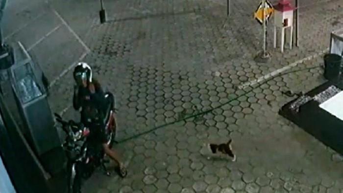 viral pemuda beri makan kucing tiap malam