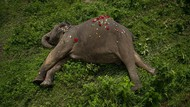 18 Gajah di India Mati Tersambar Petir