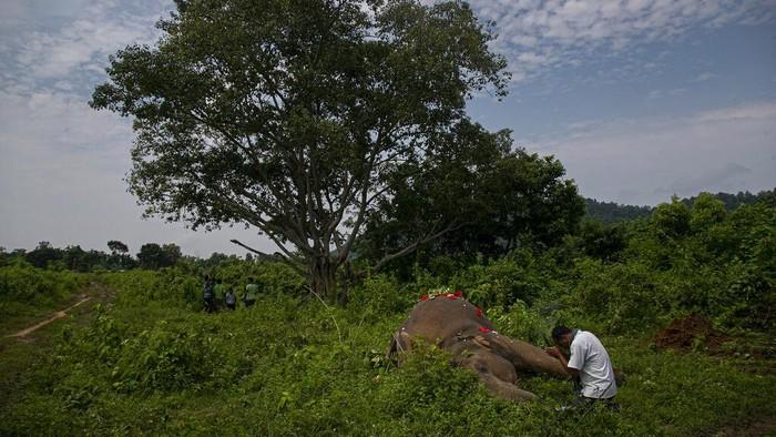 Dua gajah India yang ditemukan mati setelah disetrum saat mencari makan akhirnya dikuburkan di hutan cagar alam.