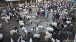 Geliat Jual Beli Kambing di Purworejo Saat Pandemi COVID-19