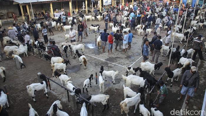 Pandemi COVID-19 tak halangi geliat jual beli kambing di Pasar Pandanrejo, Kaligesing, Purworejo. Sejumlah penjual dan pembeli tampak sibuk beraktivitas di sana
