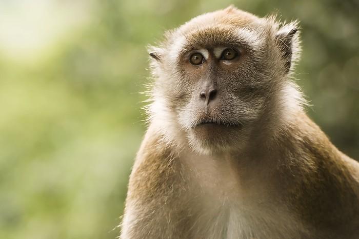 Pengalaman Chef Stefu  Makan Daging Monyet