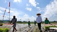 Kemendag Sebut Pandemi Jadi Peluang buat Produk Pertanian, Maksudnya?