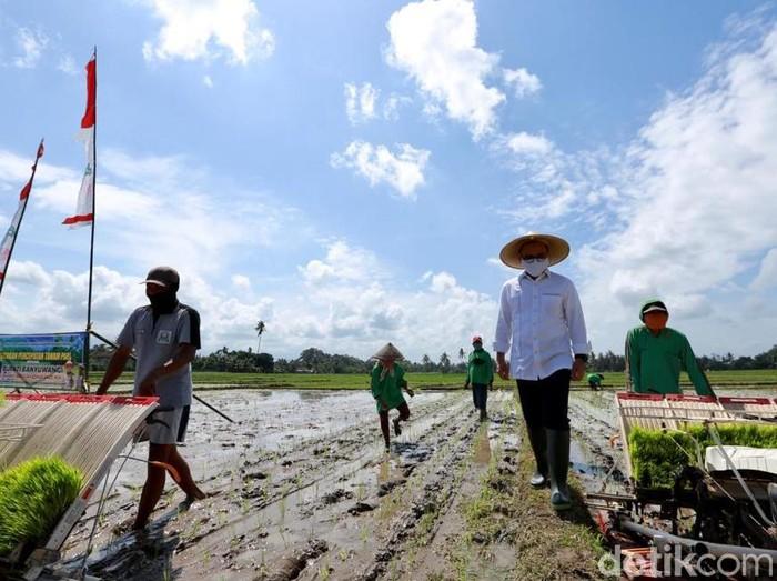 pertanian banyuwangi