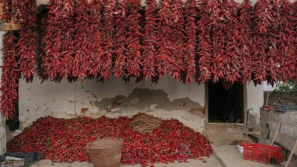 Donja Lokosnica atau kerap disebut sebagai Ibu Kota paprika di Serbia itu merupakan kawasan di Serbia dimana para warganya bekerja sebagai petani paprika merah.