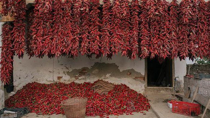 Kawasan Donja Lokosnica kerap disebut sebagai Ibu Kota paprika di Serbia. Pasalnya, kawasan itu diketahui mampu produksi sekitar 500 ton paprika tiap tahunnya.
