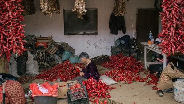 Seorang warga tengah menyiapkan benang untuk menyusun paprika merah yang akan dijemur di area sekitar rumahnya di kawasan Donja Lokosnica, Serbia.