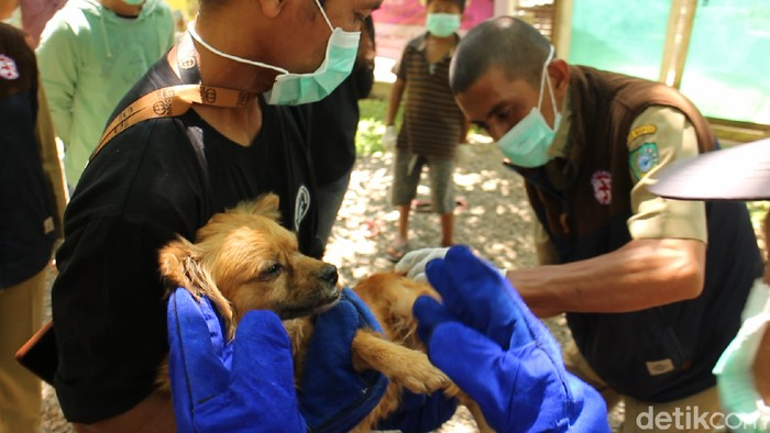 Anjing terlantar di Maros, Sulsel, disuntik vaksin.