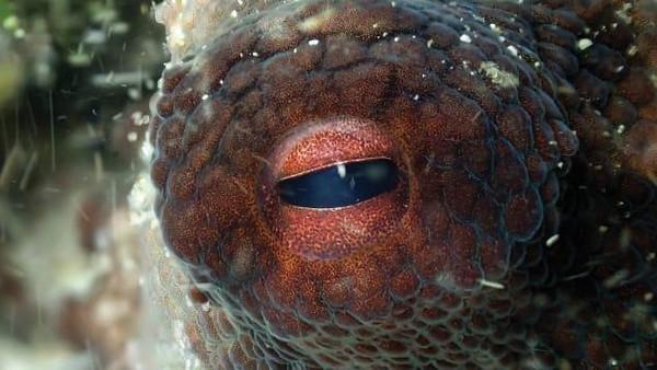 Craig Foster memutuskan untuk mendekati seekor gurita yang ditemuinya ke bawah laut. Saat itu, dia tengah di ujung paling selatan Afrika.