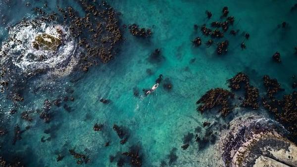 Foster sudah menghabiskan waktu selama 10 tahun untuk menyelam di hutan rumput laut Samudra Atlantik, di lepas pantai barat Afrika Selatan.