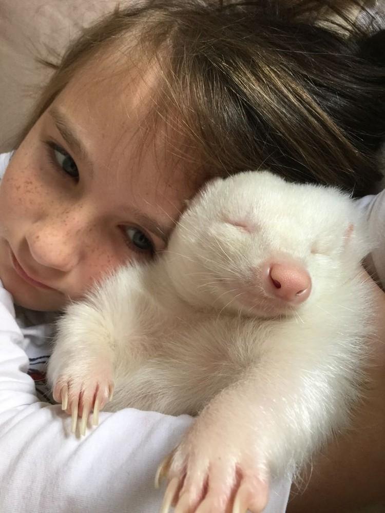 Hewan Albino