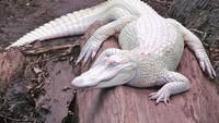 Penampakan Hewan Albino yang Langka dan Mempesona