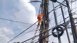 Meong! Kucing Terjebak 3 Hari di Pohon Aren 15 Meter Akhirnya Dievakuasi