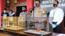Jual Satwa Dilindungi, Dua Pria Ditangkap Polisi di Majalengka