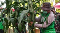 Pemkab Situbondo Siapkan Lahan Marginal 1.000 Hektar Untuk Tanaman Sorgum