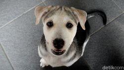 Pernah Ribut dengan Tetangga Gegara Gonggongan Anjing Berisik?