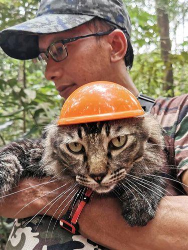 Aksi kucing jibek yang suka mendaki gunung