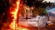 Mengenal Glass Fire, Setengah Hektar Hutan Terbakar Tiap Lima Detik