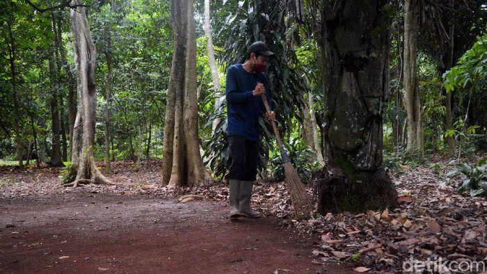 Taman Hutan Raya Pancoran Mas jadi disebut sebagai salah satu cagar alam tertua di Indonesia. Tahura itu pun simpan beragam sejarah perkembangan kawasan Depok.