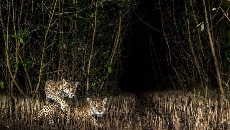 Once Again Being a Mother di hutan mangrove Meksiko juara kotes foto mangrove 2020