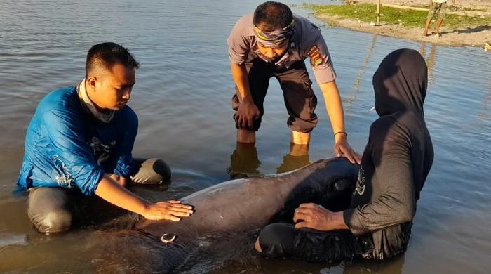 Polisi dan warga mengevakuasi seekor lumba-lumba yang terdampar di Pantai Rambang, Lombok Timur, NTB (dok Istimewa)