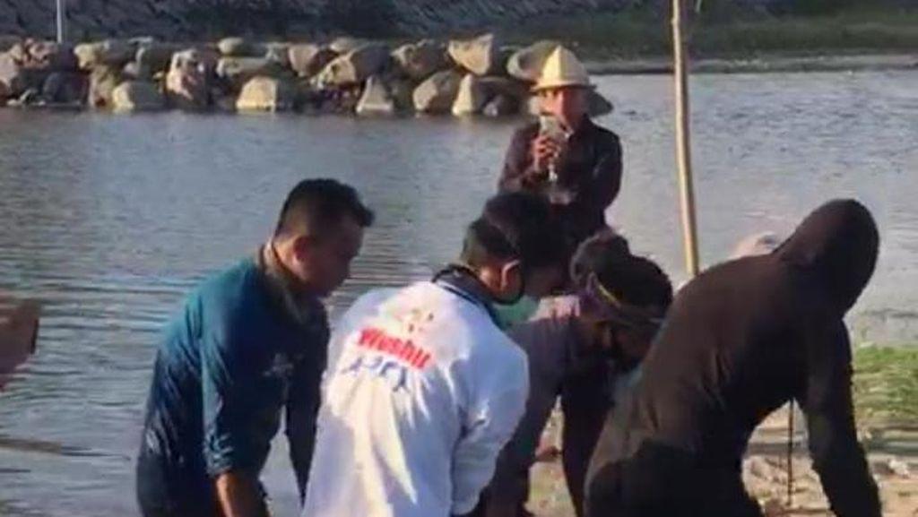 Lara Lumba-lumba Luka Terpisah hingga Terdampar di Pantai Rambang Lombok