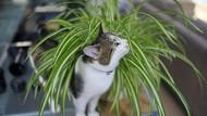 Nyaris Mati di Tempat Sampah, Kucing Ini Kemudian Jadi Duta Lingkungan
