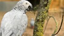 Enggak Ada Akhlak, 5 Burung Nuri Ini Hobi Mengumpat