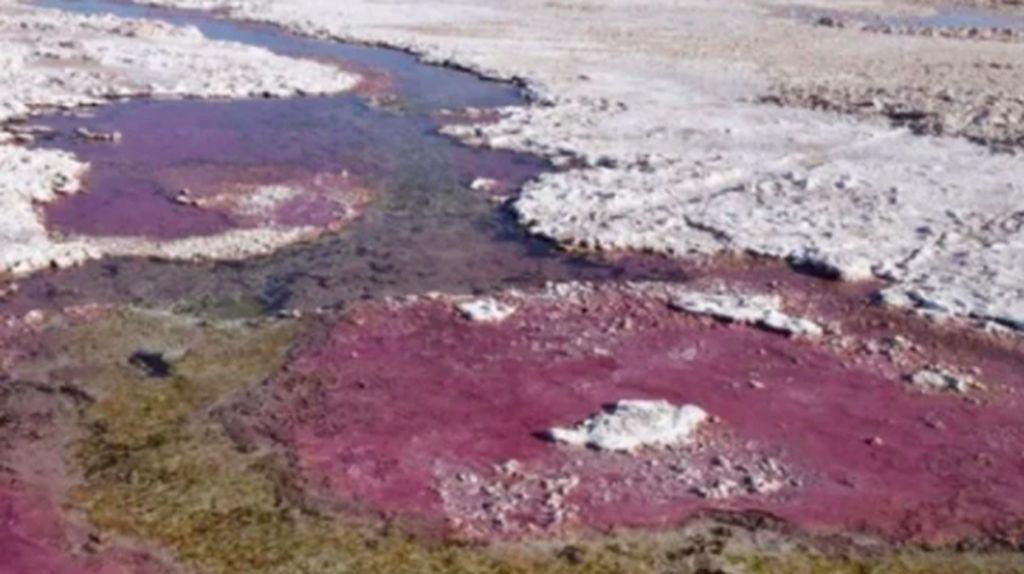 Sebelum Ada Oksigen, Makhluk Bumi Menghirup Arsenik