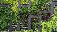 5 Tanaman Merambat untuk Hias Dinding Agar Rumah Cantik