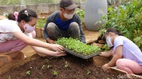 Hal itu dilakukan untuk mengenalkan kehidupan pertanian kepada anak-anak.