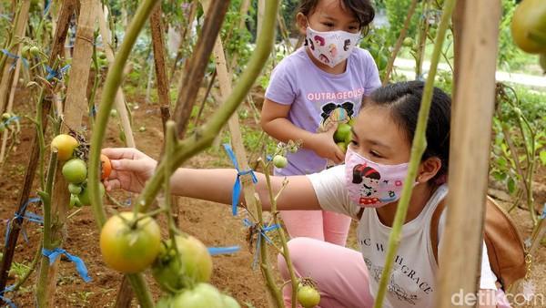 Dua orang anak mendapat pengenalan bercocok-tanam dalam kegiatan wisata edukasi di Sukalarang, Sukabumi, Jawa Barat.
