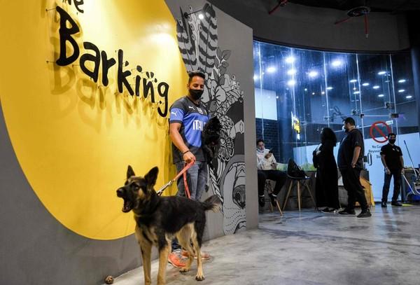 Seperti diketahui, kafe bertema anjing itu baru saja buka pada bulan Juni 2020 kemarin. Padahal sebelumnya, anjing di Arab Saudi tak diperbolehkan berkeliaran di ruang publik.