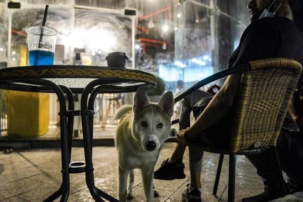 Walau memelihara anjing tidak populer di kalangan orang Muslim, tak sedikit anak muda dan wanita yang berkumpul di kafe milik Dalal sambil membawa anjing peliharaan berbagai jenis.