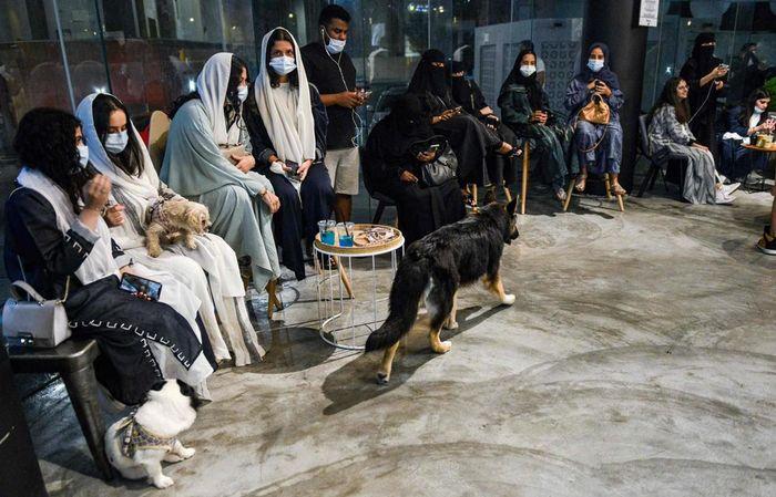 Kafe bertema anjing di Arab Saudi.