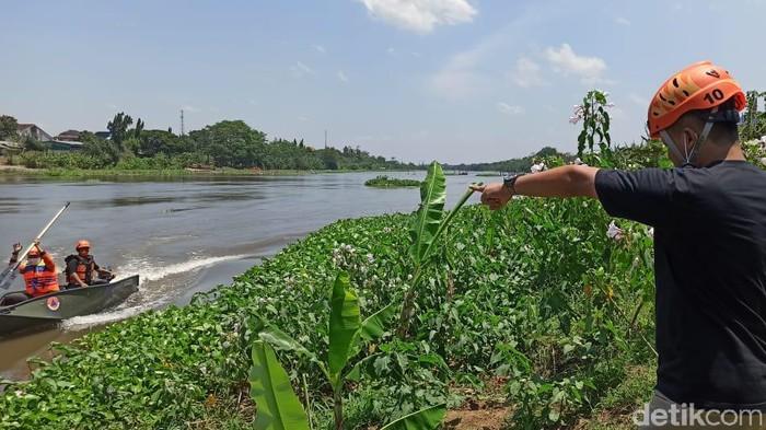 BPBD kota kediri mencari keberadaan buaya di sungai brantas