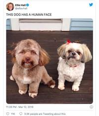 Hewan mirip manusia